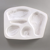 Fossils Mold - 9.25 x 7 in.