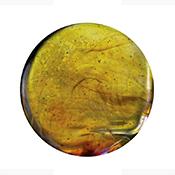 Exotic Citrus Yellow 20 in. Rod 33 COE (1/4 lb. minimum order)
