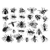 Bees Black Decals