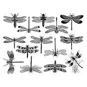Dragonflies Black Decals