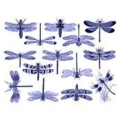 Dragonflies Blue Decals