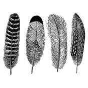 Feathers Black Decals