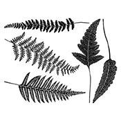 Ferns Black Decals